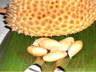biji-durian