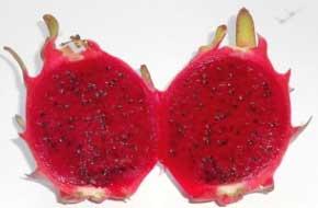 buah-naga-merah