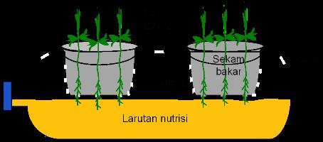 hidroponik-botol-rebah