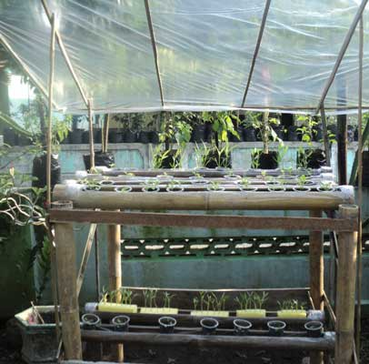 hidroponik-pipa-bambu