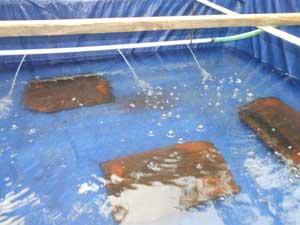 kolam-penetasan-ikan-lele
