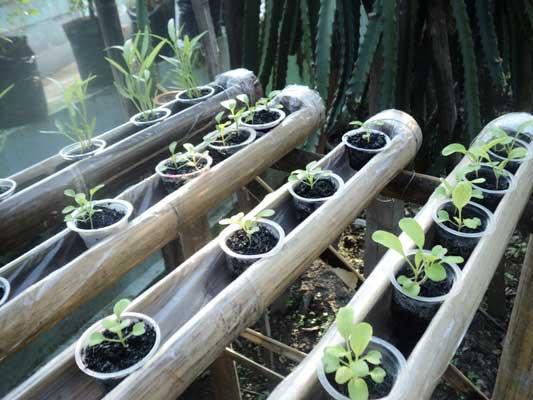 lapisan-plastik-pipa-bambu