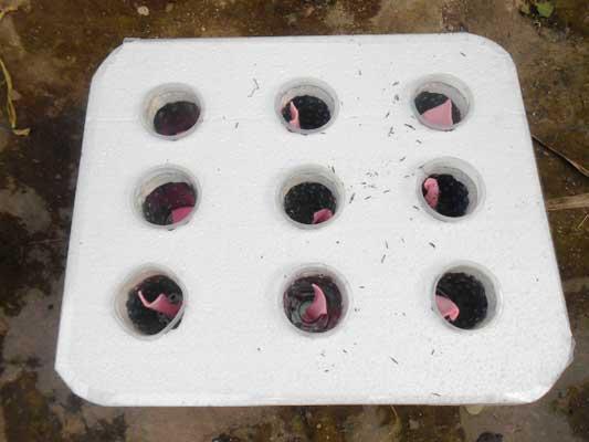 sterofoam-tutup-bak-hidroponik