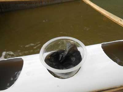 tutup-plastik-aquaponik